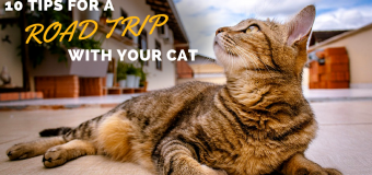 10 Tips for Going on a Road Trip With Your Cat