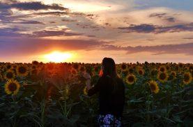 Sunflower Sunset Bulgaria
