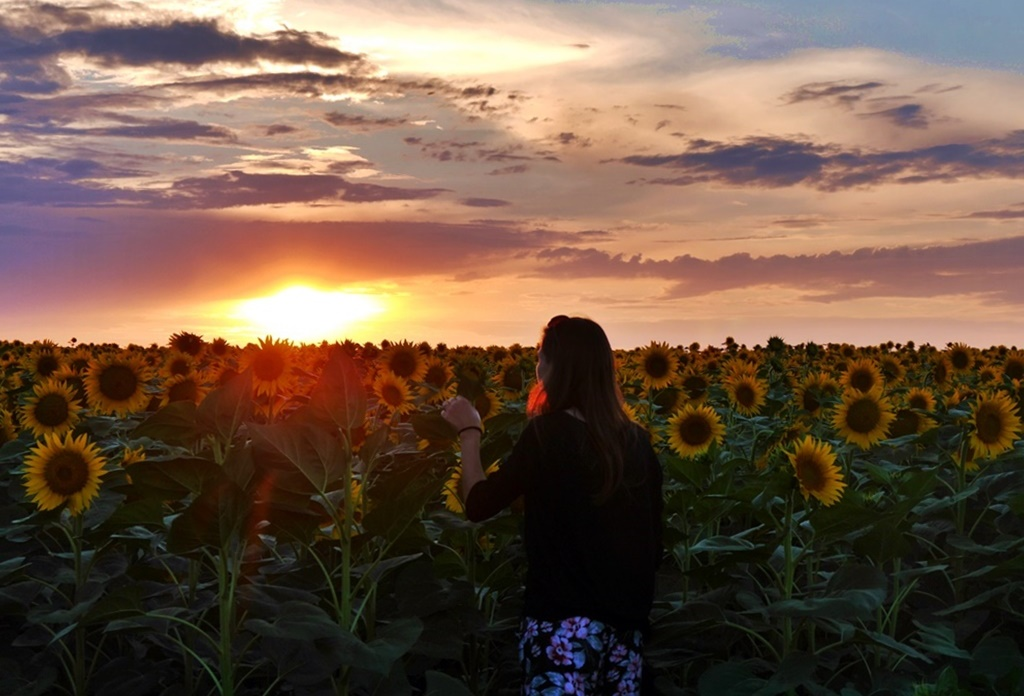 Sunflower Sunset Bulgaria