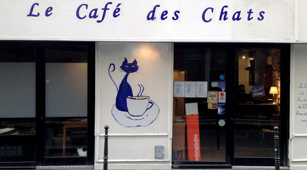 best cat cafes around the world